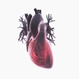 3D heart representation